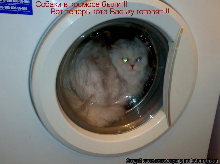 Котоматрица: Собаки в космосе были!!! Вот теперь кота Ваську готовят!!!