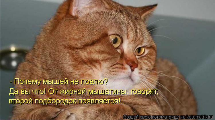 Котоматрица: - Почему мышей не ловлю? Да вы что! От жирной мышатины, говорят, второй подбородок появляется!..
