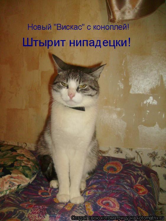 """Котоматрица: Новый """"Вискас"""" с коноплей! Штырит нипадецки!"""