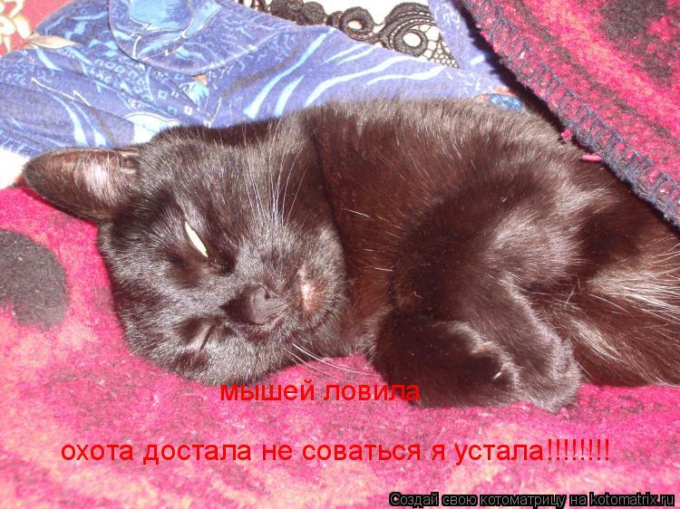 Котоматрица: мышей ловила  охота достала не соваться я устала!!!!!!!!