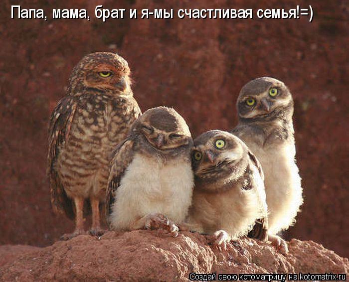 Котоматрица: Папа, мама, брат и я-мы счастливая семья!=)