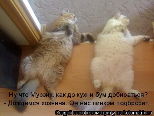 Котоматрица: - Ну что Мурзик, как до кухни бум добираться? - Дождемся хозяина. Он нас пинком подбросит.