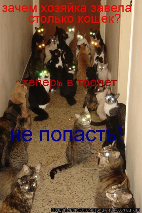 Котоматрица: зачем хозяйка завела столько кошек? теперь в тоолет не попасть!