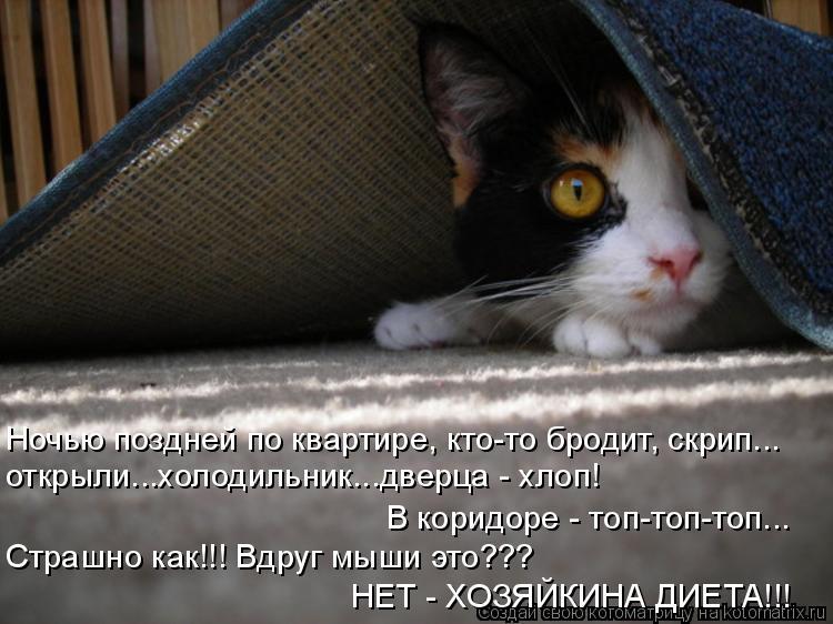Котоматрица: Ночью поздней по квартире, кто-то бродит, скрип... открыли...холодильник...дверца - хлоп! В коридоре - топ-топ-топ... Страшно как!!! Вдруг мыши это??
