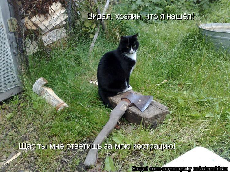 Котоматрица: Видал, хозяин, что я нашёл! Щас ты мне ответишь за мою кострацию!