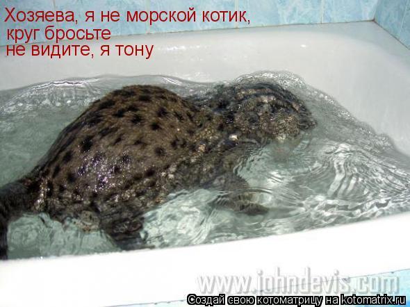 Котоматрица: Хозяева, я не морской котик, круг бросьте не видите, я тону