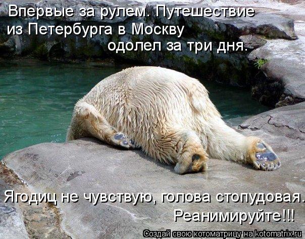 Котоматрица: Впервые за рулем. Путешествие из Петербурга в Москву  Ягодиц не чувствую, голова стопудовая.  Реанимируйте!!! одолел за три дня.