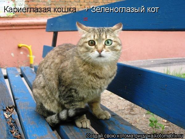 Котоматрица: Кариеглазая кошка + Зеленоглазый кот =