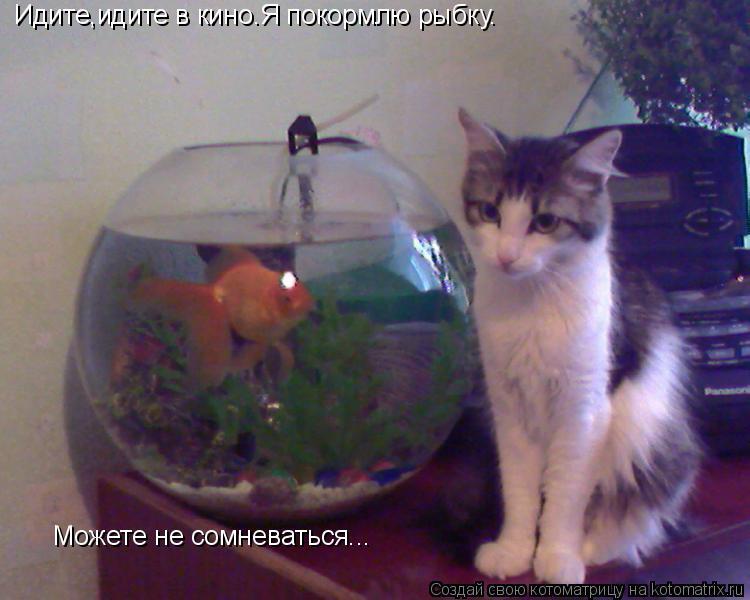 Котоматрица: Идите,идите в кино.Я покормлю рыбку. Можете не сомневаться...