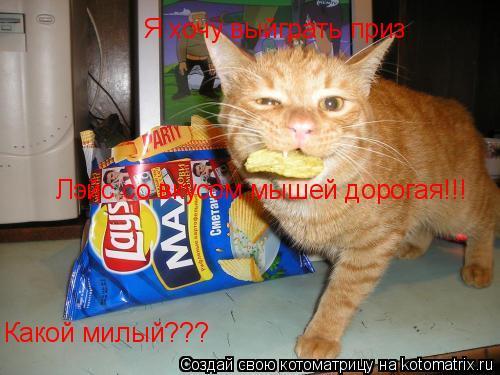 Котоматрица: Я хочу выйграть приз Какой милый??? Лэйс со вкусом мышей дорогая!!!