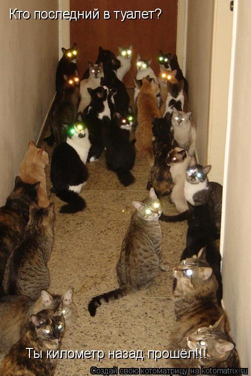 Котоматрица: Кто последний в туалет? Ты километр назад прошёл!!!