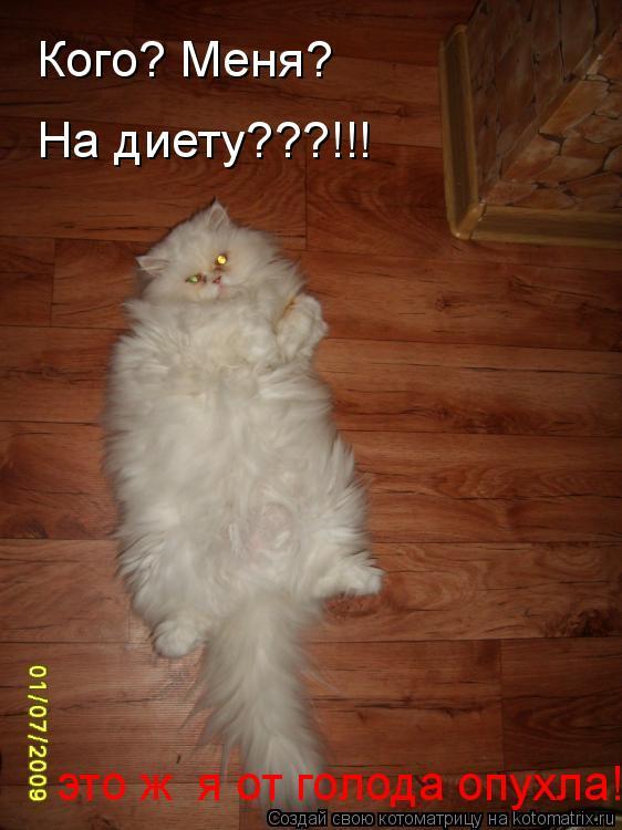 Котоматрица: Кого? Меня? На диету???!!! это ж  я от голода опухла!