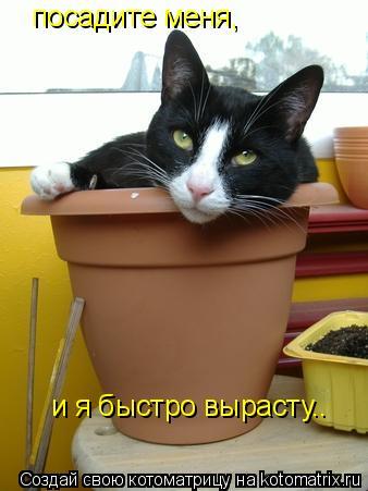 Котоматрица: посадите меня, и я быстро вырасту..