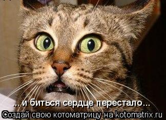 Котоматрица: ... и биться сердце перестало...