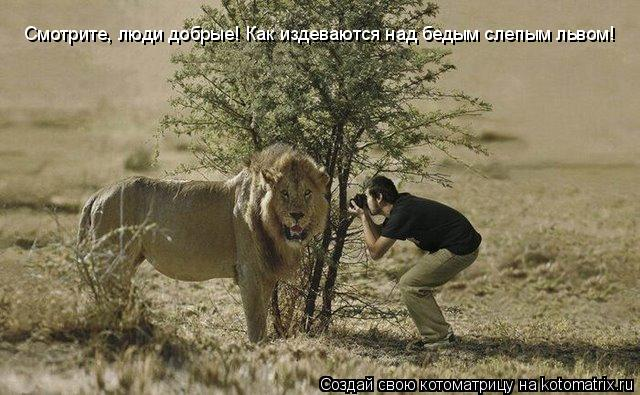 Котоматрица: Смотрите, люди добрые! Как издеваются над бедым слепым львом!