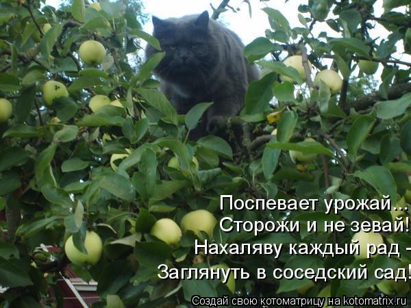 Котоматрица: Поспевает урожай... Сторожи и не зевай! Нахаляву каждый рад - Заглянуть в соседский сад!
