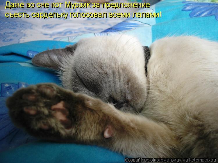 Котоматрица: Даже во сне кот Мурзик за предложение съесть сардельку голосовал всеми лапами!