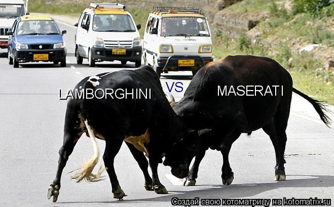 Котоматрица: LAMBORGHINI VS MASERATI