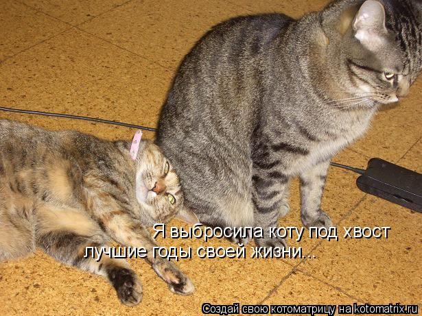 Котоматрица: Я выбросила коту под хвост лучшие годы своей жизни...
