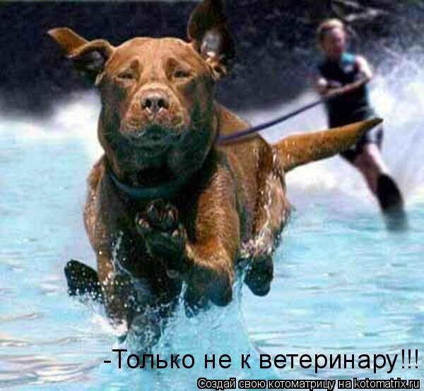 Котоматрица: -Только не к ветеринару!!!
