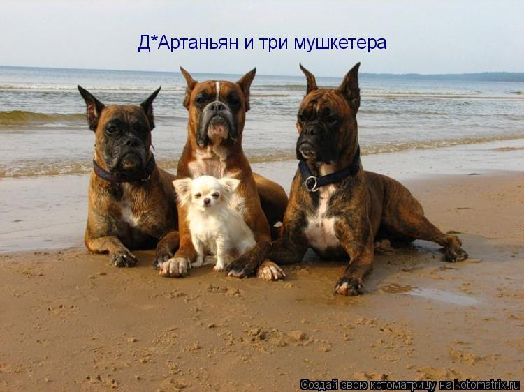 Котоматрица: Д*Артаньян и три мушкетера