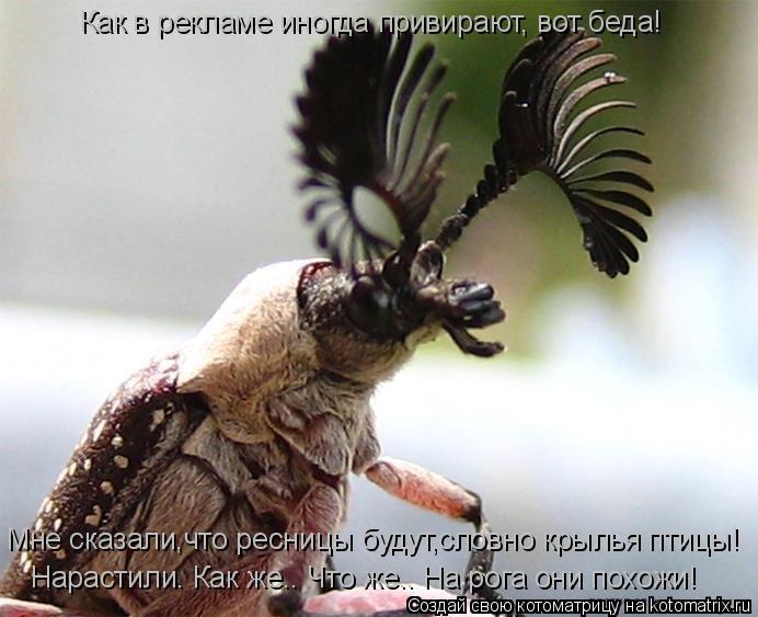 Котоматрица: Как в рекламе иногда привирают, вот беда! Мне сказали,что ресницы будут,словно крылья птицы! Нарастили. Как же…. Что же…. На рога они похожи!