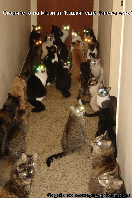 """Котоматрица: Скажите, а на Мюзикл """"Кошки"""" ещё билеты есть?"""