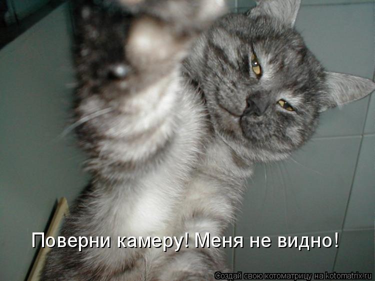 Котоматрица: Поверни камеру! Меня не видно!