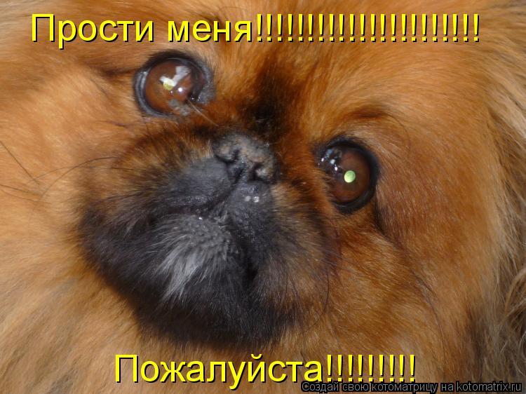 Котоматрица: Прости меня!!!!!!!!!!!!!!!!!!!!!! Пожалуйста!!!!!!!!!