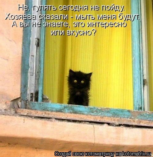 Котоматрица: Не, гулять сегодня не пойду. Хозяева сказали - мыть меня будут. А вы не знаете, это интересно или вкусно?