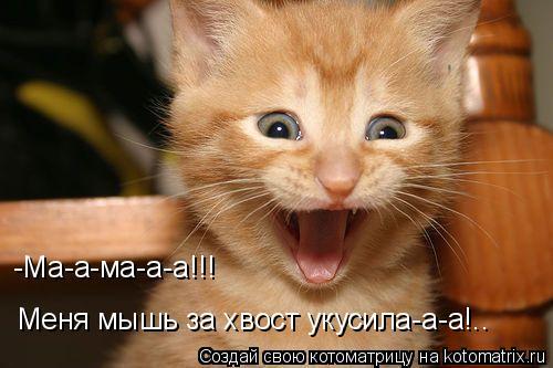 Котоматрица: -Ма-а-ма-а-а!!! Меня мышь за хвост укусила-а-а!..