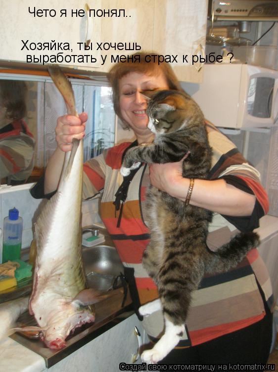 Котоматрица: Чето я не понял.. Хозяйка, ты хочешь  выработать у меня страх к рыбе ?