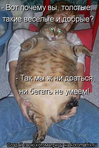 Котоматрица: - Вот почему вы, толстые, - Вот почему вы, толстые, такие веселые и добрые? - Так мы ж ни драться, ни бегать не умеем!