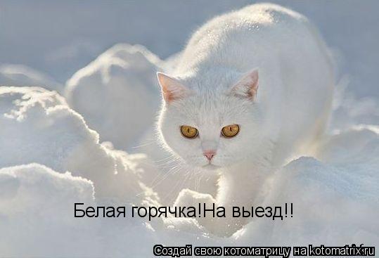 Котоматрица: Белая горячка!На выезд!!