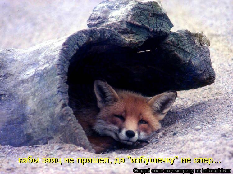 """Котоматрица: кабы заяц не пришел, да """"избушечку"""" не спер..."""