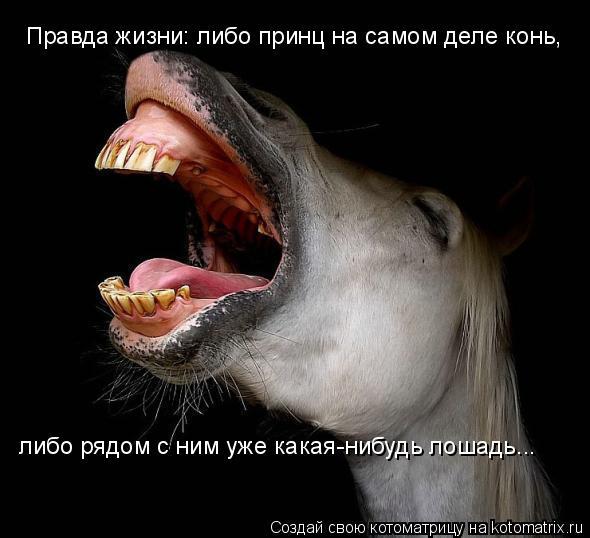 Котоматрица: Правда жизни: либо принц на самом деле конь,  либо рядом с ним уже какая-нибудь лошадь...