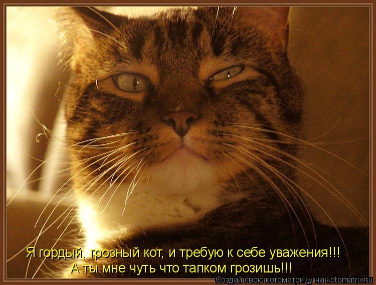 Котоматрица: Я гордый, грозный кот, и требую к себе уважения!!! А ты мне чуть что тапком грозишь!!!
