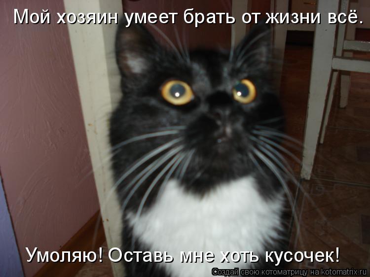 Котоматрица: Мой хозяин умеет брать от жизни всё. Умоляю! Оставь мне хоть кусочек!