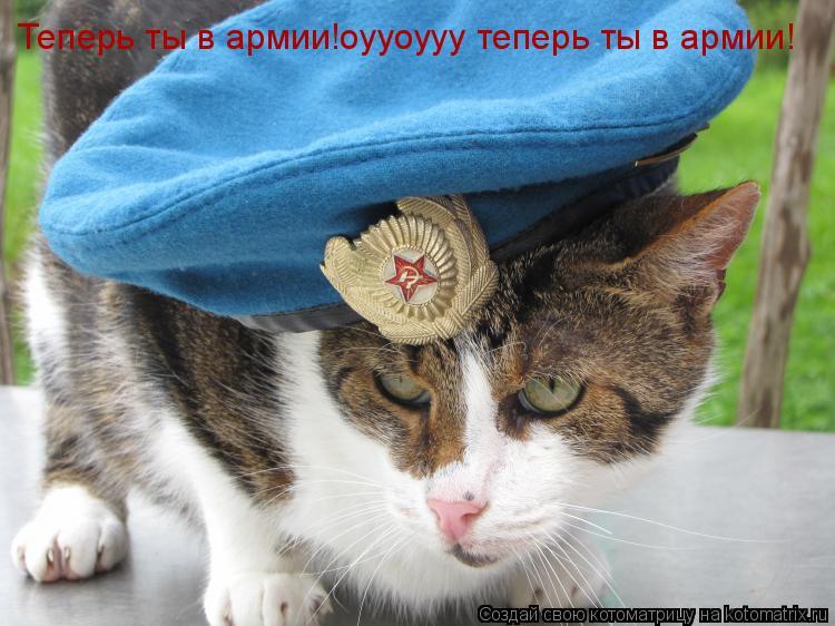 Котоматрица: Теперь ты в армии!оууоууу теперь ты в армии!