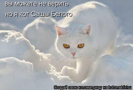 Котоматрица: вы можете не верить но я кот Сашы Белого