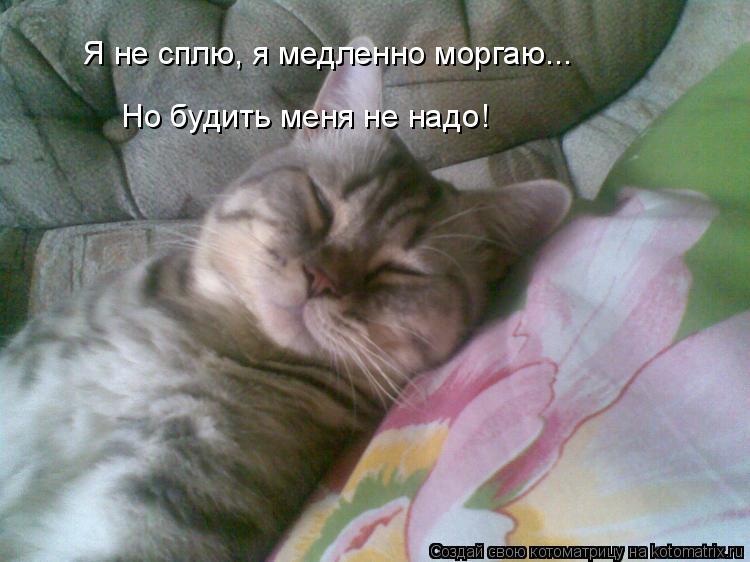 Котоматрица: Я не сплю, я медленно моргаю... Но будить меня не надо!