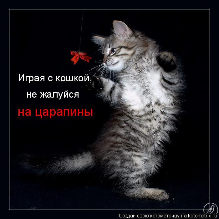 Котоматрица: Играя с кошкой, на царапины не жалуйся