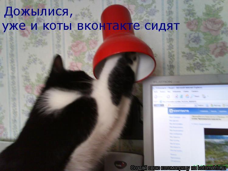 Котоматрица: Дожылися,  уже и коты вконтакте сидят