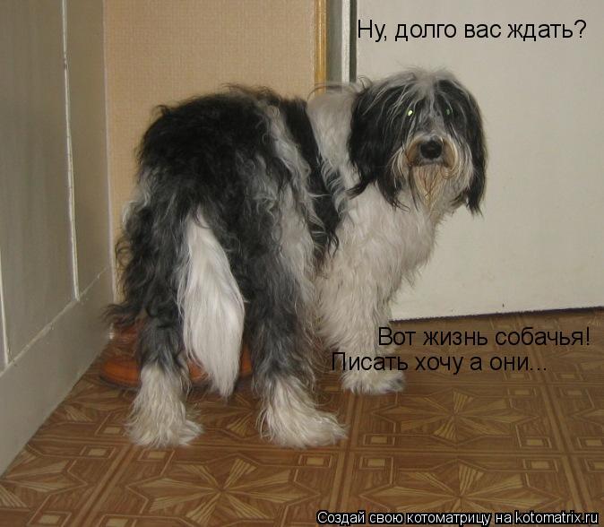 Котоматрица: Ну, долго вас ждать? Вот жизнь собачья! Писать хочу а они...