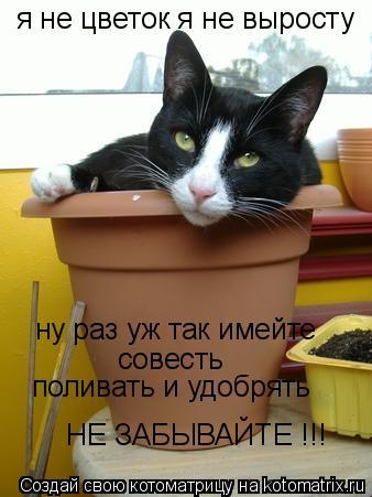 Котоматрица: я не цветок я не выросту ну раз уж так имейте совесть поливать и удобрять НЕ ЗАБЫВАЙТЕ !!!
