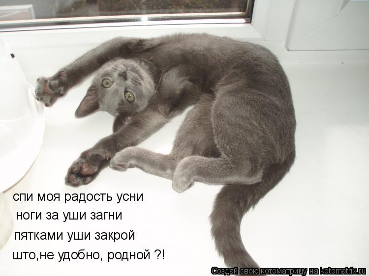 Котоматрица: што,не удобно, родной ?! пятками уши закрой  ноги за уши загни спи моя радость усни