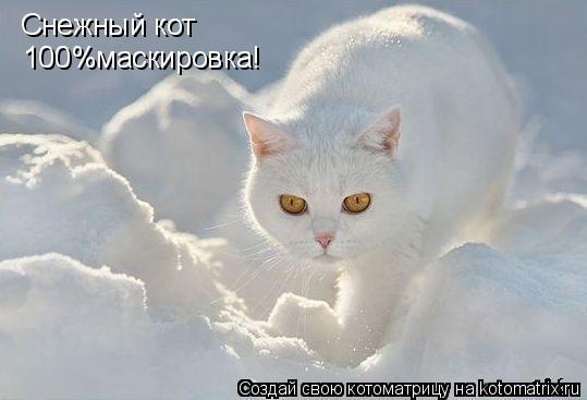 Котоматрица: Снежный кот  100%маскировка!