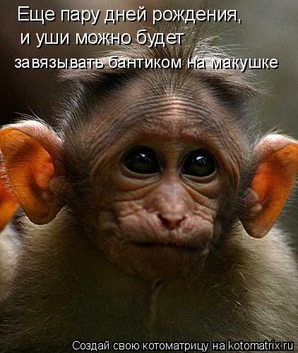 Котоматрица: Еще пару дней рождения, и уши можно будет завязывать бантиком на макушке
