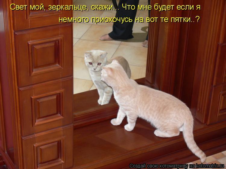 Котоматрица: Свет мой, зеркальце, скажи... Что мне будет если я немного приохочусь на вот те пятки..?
