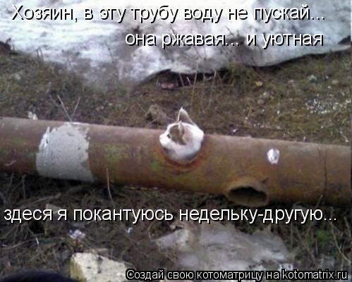 Котоматрица: Хозяин, в эту трубу воду не пускай... она ржавая... и уютная  здеся я покантуюсь недельку-другую...